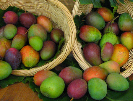 basket of mangoes