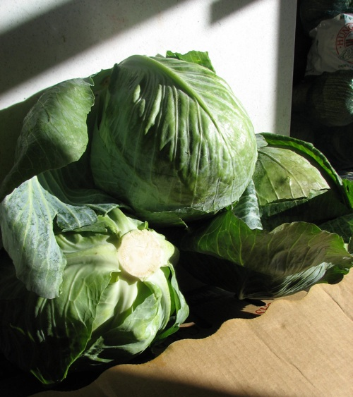 Cabbage from the San Francisco Food Bank