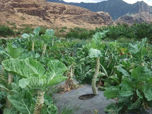 Ma'o Farms